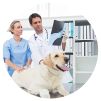 veterinary assortiment
