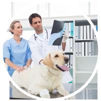 veterinary assortiment